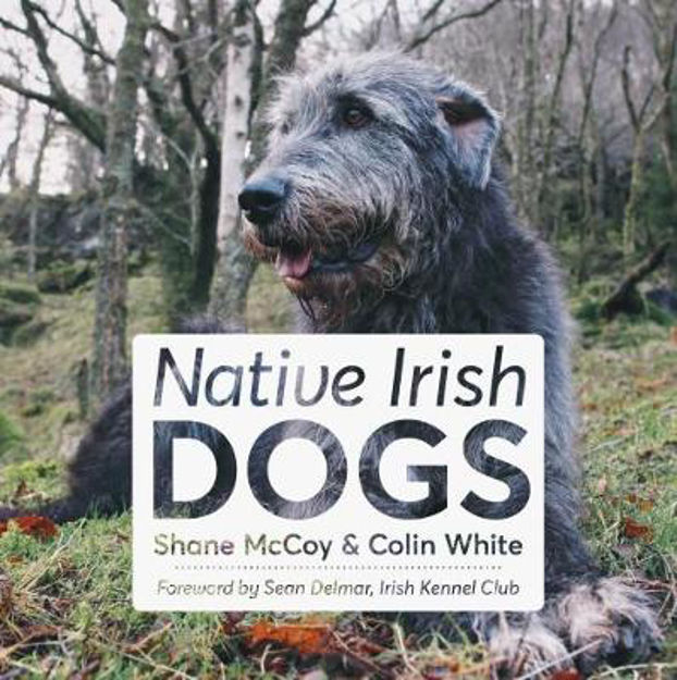 Picture of Native Irish Dogs
