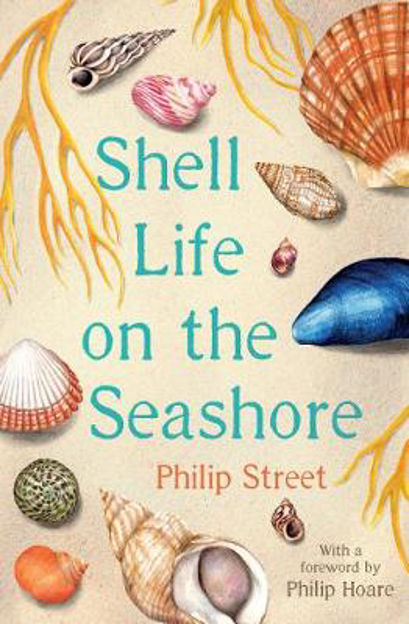 Picture of Shell Life on the Seashore