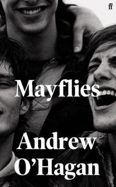 Picture of Mayflies